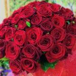 Вирощування і розведення троянд на продаж