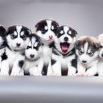 Розведення породистих собак як бізнес